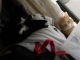 笑顔逸品「猫ちゃんのエイジングケアに特化したおもいやりフード」お試し♪の画像(8枚目)