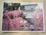 ★春は、桜★