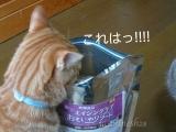 猫モニター: 猫ちゃんのエイジングケアに特化したおもいやりフード レビューの画像(7枚目)