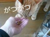 猫モニター: 猫ちゃんのエイジングケアに特化したおもいやりフード レビューの画像(9枚目)