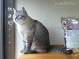 猫モニター: 猫ちゃんのエイジングケアに特化したおもいやりフード レビューの画像(10枚目)