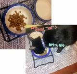 コジマ「猫ちゃんのエイジングケアに特化したおもいやりフード」の画像(2枚目)