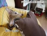 【モニター】ペットもうれしい抗菌コート・ラミネアの画像(7枚目)