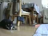 【50名様】2ヶ月無料・無償!!「リモカ2」モニターキャンペーン大募集!の画像(15枚目)