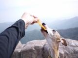 【モニター】ケイナインキャビア オーガニック干し芋の画像(3枚目)
