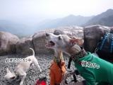 【モニター】ケイナインキャビア オーガニック干し芋の画像(7枚目)
