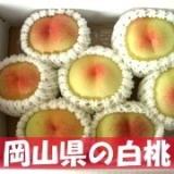 岡山県の白桃の画像(1枚目)