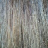 ☆パーフェクトな素髪めざして ideal series ヘアクリーム LALA お試しレポ☆の画像(4枚目)