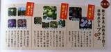 「薬用 濃い柿渋石鹸」の画像(2枚目)