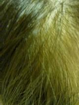 「100%天然植物成分の白髪染めマックヘナとAHシャンプー&トリートメント 」の画像(6枚目)