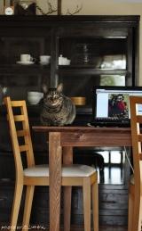 【肉球タイム】猫と聞くとスルーできないの画像(4枚目)