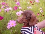 花の都公園・満開ではないけれどコスモスの画像(5枚目)