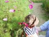 花の都公園・満開ではないけれどコスモスの画像(6枚目)