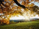 故郷の秋…。