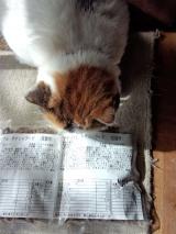 マテリアル キャットフード 成猫用 の画像(3枚目)