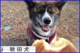 【完全無添加!国内鶏ささみを使った愛犬の健康おやつ「ささみ煎餅」】