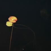 「秋の風景」あなたが見つけた「秋の風景」写真コンテスト!の投稿画像