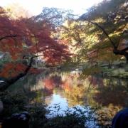「成田山で」あなたが見つけた「秋の風景」写真コンテスト!の投稿画像