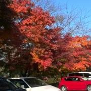 「車の赤よりもみじの紅」あなたが見つけた「秋の風景」写真コンテスト!の投稿画像