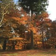 「京都 宮津」あなたが見つけた「秋の風景」写真コンテスト!の投稿画像