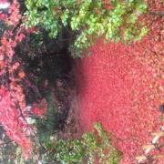 「秋のじゅうたん」あなたが見つけた「秋の風景」写真コンテスト!の投稿画像