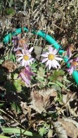 実家の木と花の写真貼り付けます…の巻の画像(6枚目)