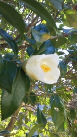 実家の木と花の写真貼り付けます…の巻の画像(1枚目)