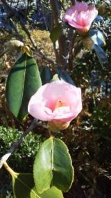 実家の木と花の写真貼り付けます…の巻の画像(4枚目)
