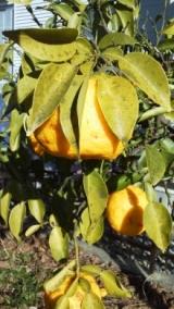 実家の木と花の写真貼り付けます…の巻の画像(3枚目)
