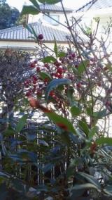 実家の木と花の写真貼り付けます…の巻の画像(5枚目)