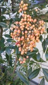 実家の木と花の写真貼り付けます…の巻の画像(7枚目)