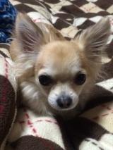 愛犬 れもん ☆の画像(3枚目)