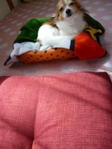 「【京座布団高岡】座布団と幸せを運ぶ    山田たかおの幸せ小座布団 」の画像(9枚目)