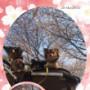 魚の無添加ドッグフード「フィッシュ4ドッグスーペリアパピー」の画像(10枚目)