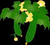 ヘチマの種まきの画像(1枚目)