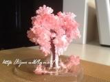 【完成!】*6時間で咲くハート「マジックラブツリー ミニ」を咲かせてみました♪の画像(8枚目)