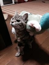 猫のごはんが当選しました。の画像(1枚目)