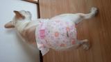 ユニチャーム ペット用 マナーウェア 女の子用の画像(3枚目)