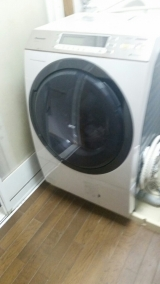 new洗濯機《*≧∀≦》の画像(1枚目)