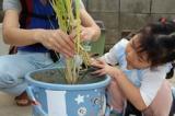 いよいよ収穫☆バケツ稲の画像(4枚目)