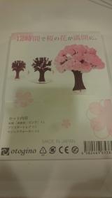 良いお年を…♪35幸せをよぶマジック桜の画像(3枚目)