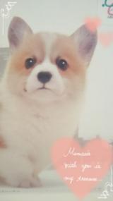 ペットの専門店コジマ★オリジナルカレンダーの画像(4枚目)