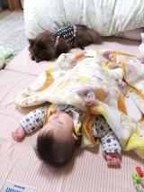 「実家犬ポメラニアン チコとジュニアの距離(・∀・)徐々に縮まる? | アクセラ姫のとにかく毎日ハプニング - 楽天ブログ」の画像(4枚目)