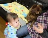 「実家犬ポメラニアン チコとジュニアの距離(・∀・)徐々に縮まる? | アクセラ姫のとにかく毎日ハプニング - 楽天ブログ」の画像(1枚目)