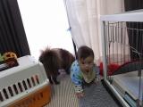 「実家犬ポメラニアン チコとジュニアの距離(・∀・)徐々に縮まる? | アクセラ姫のとにかく毎日ハプニング - 楽天ブログ」の画像(2枚目)