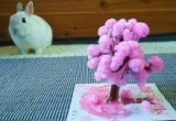 Magic 桜の画像(6枚目)