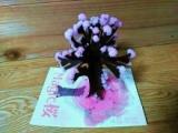 Magic 桜の画像(4枚目)