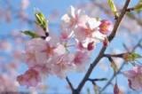 口コミ記事「話題のハンドクリームinアボカドオイル。春の紫外線ケア*」の画像