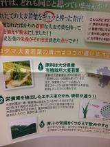KODAMA 大麦若葉エキスの青汁の画像(3枚目)