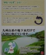 明日は父の日♡超特大!熊本県更左うなぎでお祝いしよう♪の画像(4枚目)